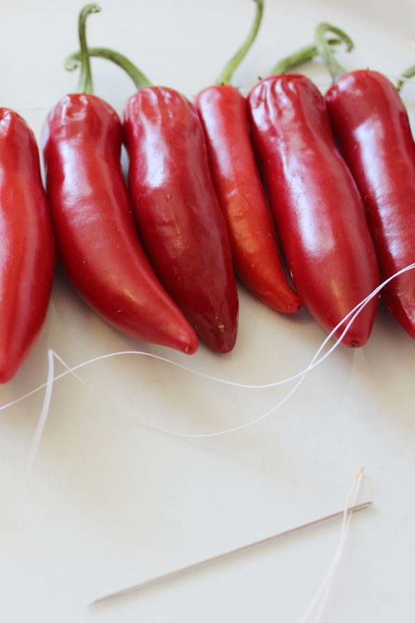 Hot peppers getting strung unto thread with a needle.