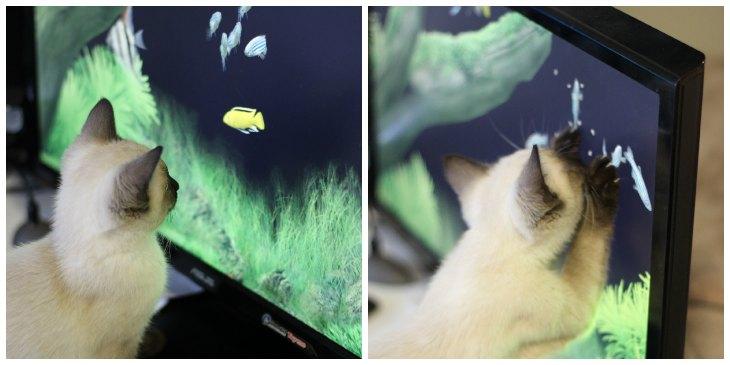 Kitten Fishing