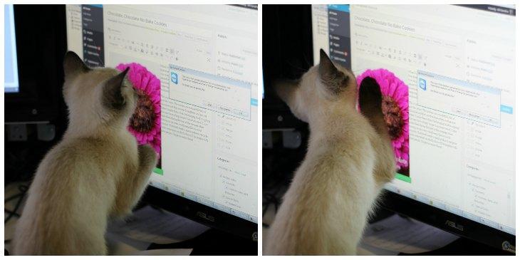 KittenBlogging