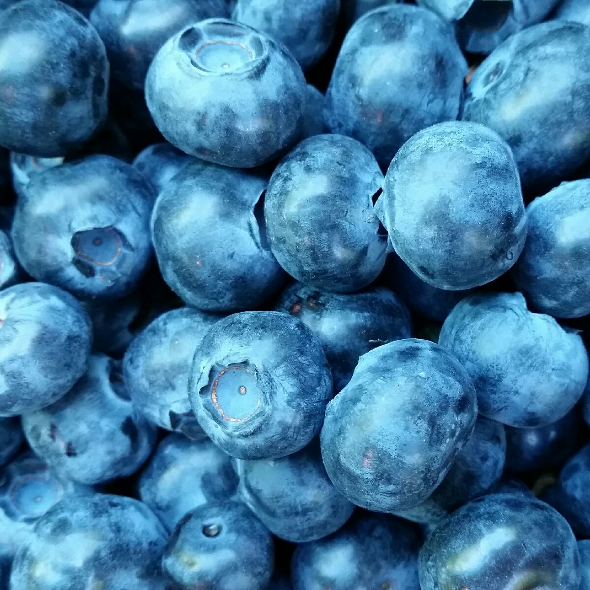 oregon-blueberries