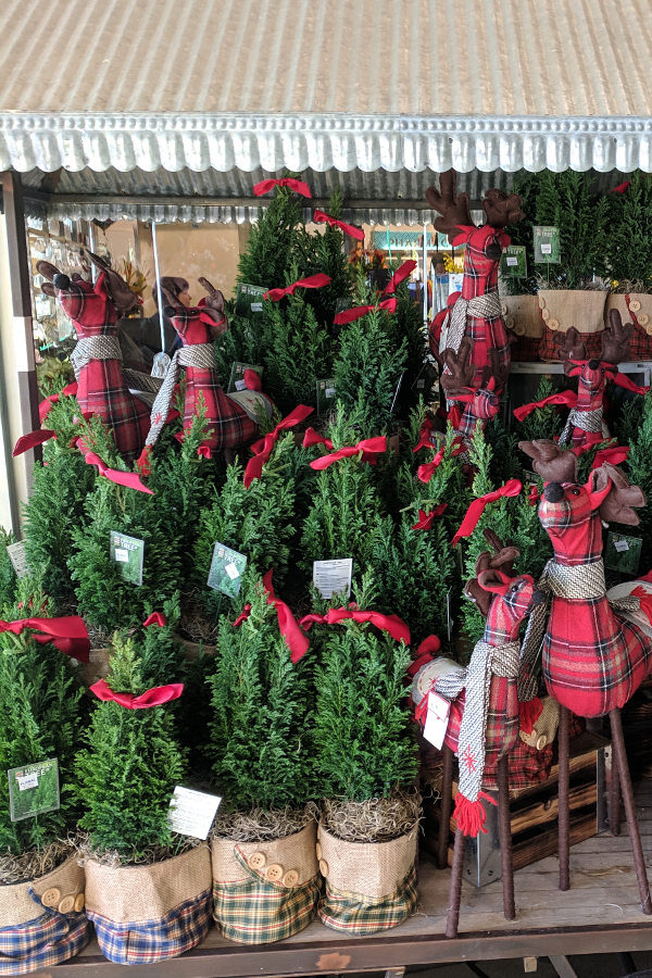 A display of small potted Christmas trees with a few plaid dear.