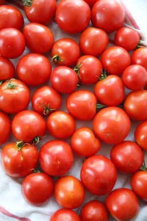 A tray of ripe tomatoes waits to be frozen. You can just see a white tea towel peeping out from under the tomatoes.